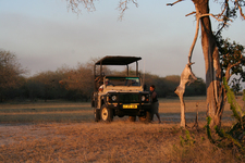 Selous Impala Game Drive4