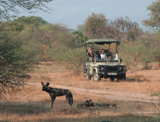 Manzegamedrive Wild Dogsw