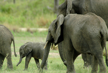 Lake Manze Elephants (15)W